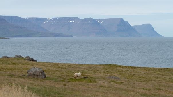 Island_Tag5_2