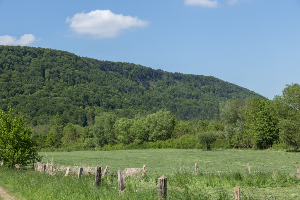 Wiesen unterhalb des Wesergebirges (Bild: B. Knispel)