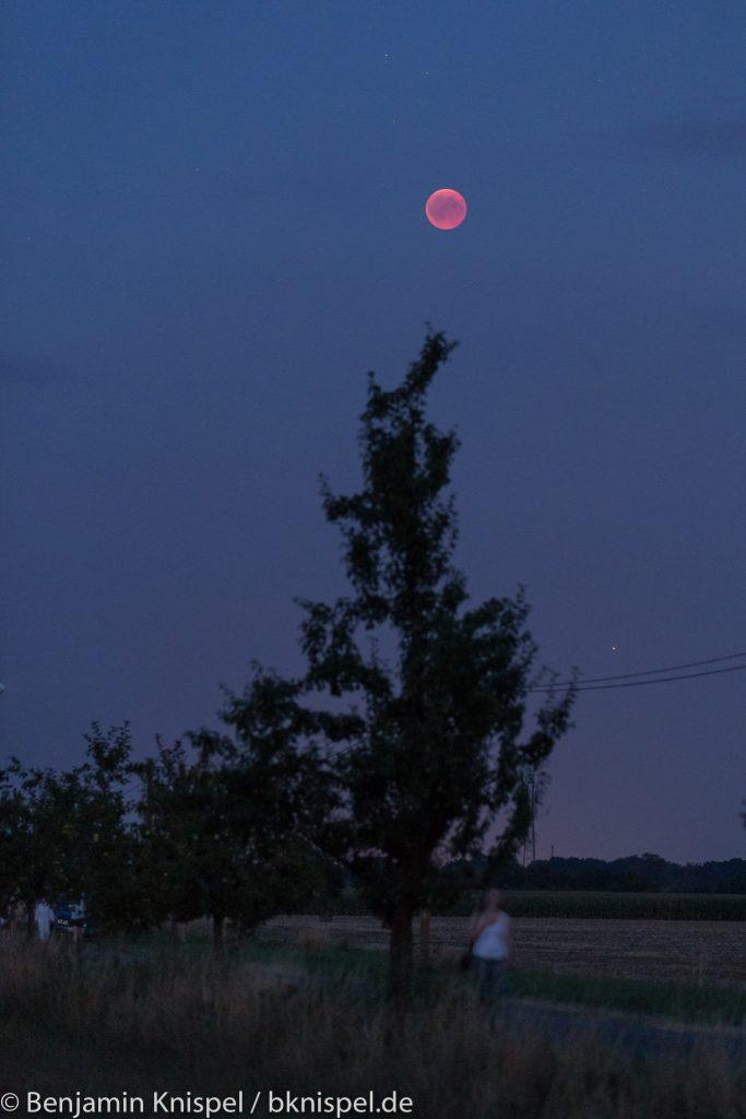 Ein erster Blick auf dem Mond in der Dämmerung. Mit bloßem Auge war die Farbe deutlich weniger intensiv und der Kontrast zum Himmel deutlich geringer. (Bild: B. Knispel)